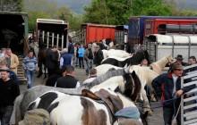 Puck Fair - County Kerry Horse Fair